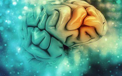 Causes of Alzheimer's